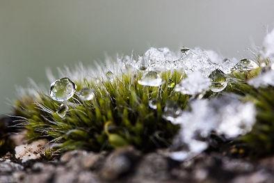 melting snow 1a.jpg