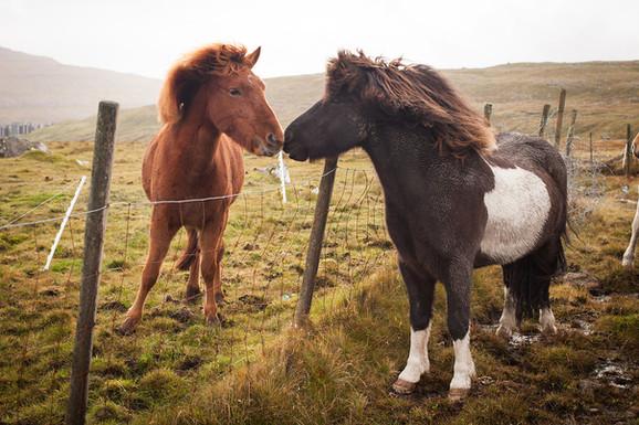 Faroes | Viking Shores