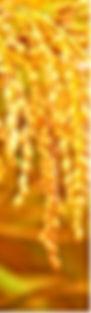 kiito-41.jpg