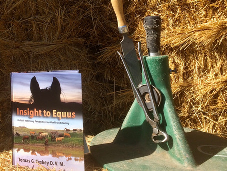 PRE-ORDER your copy of Insight to Equus NOW