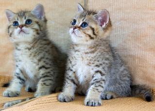 Kitten in New Home