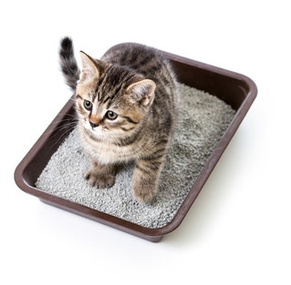 How to train your kitten to use litter box.