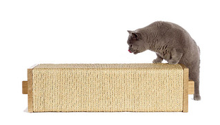 How to train your cat to use a scratch post…