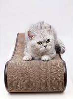 British cat and a scratch board