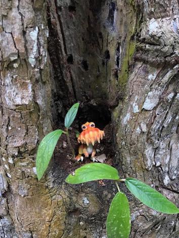 fungisaurs-tree (1).JPG