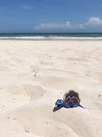 fungisaurs-tulum-beach (1).JPG