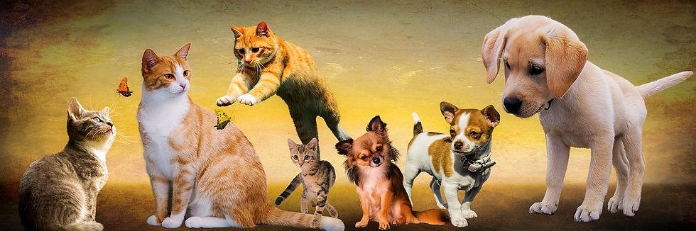 animals-2222007_1280.jpg