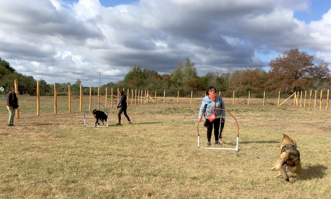 Cours collectifs chiens
