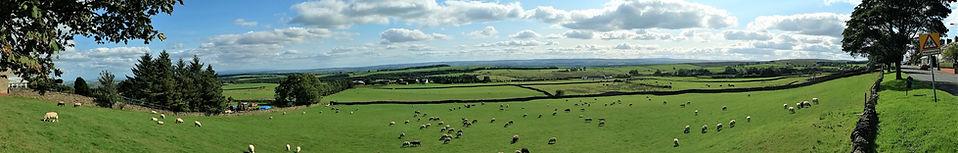 Woodland Panorama 01 (2).jpg