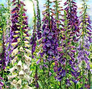 Susie Is well known for her vibrant floral paintings & highly detailed paintings of properties, scenes, gardens locally & internationally.