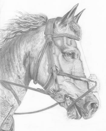 horses-rob-ballentinejpg
