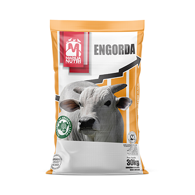 MFÓS ENGORDA 40