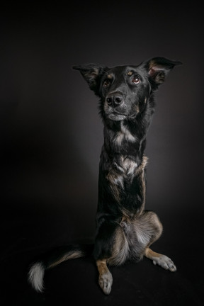 @theaustinroo, rescued disabled dog