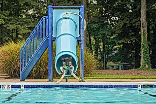 dogswim-58.jpg