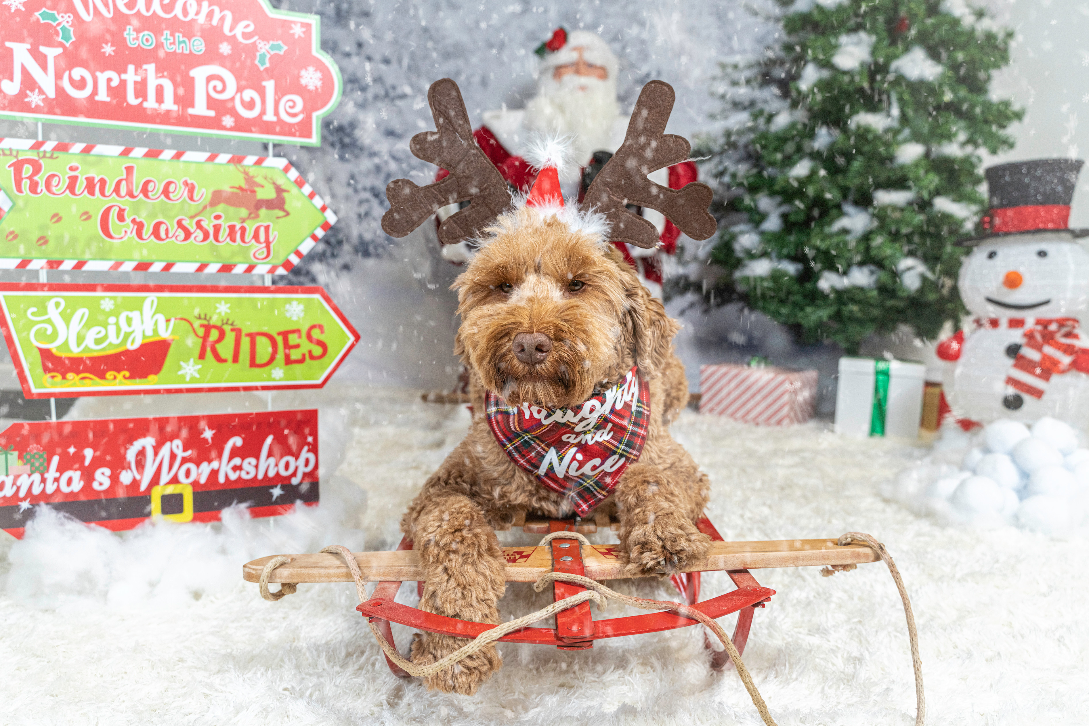 PET HOLIDAY SESSION