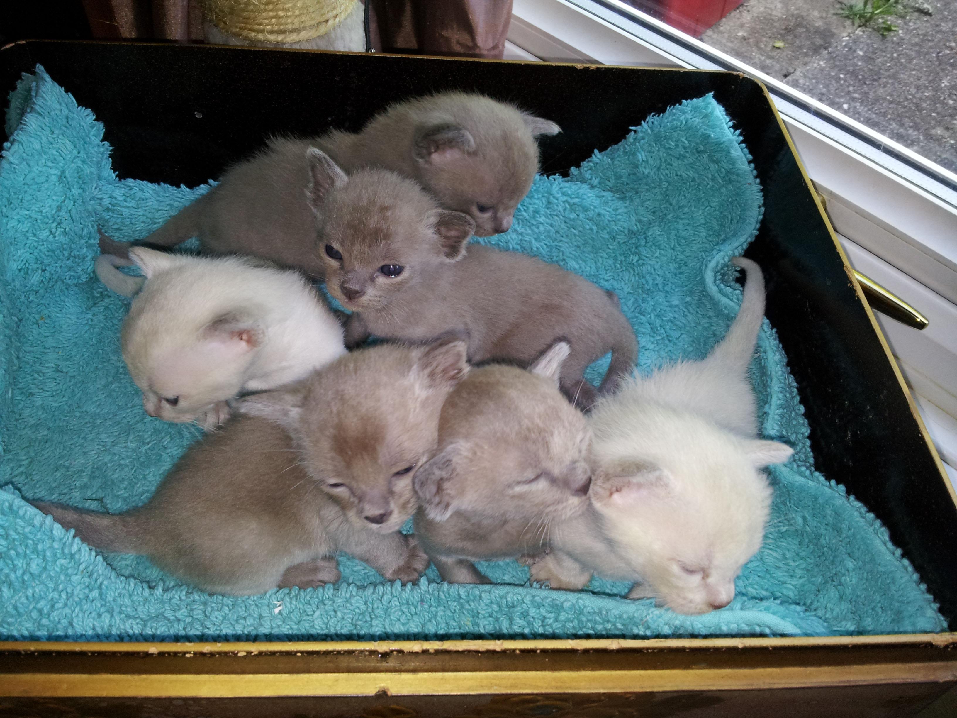 Bella Kittens (15-05-16)
