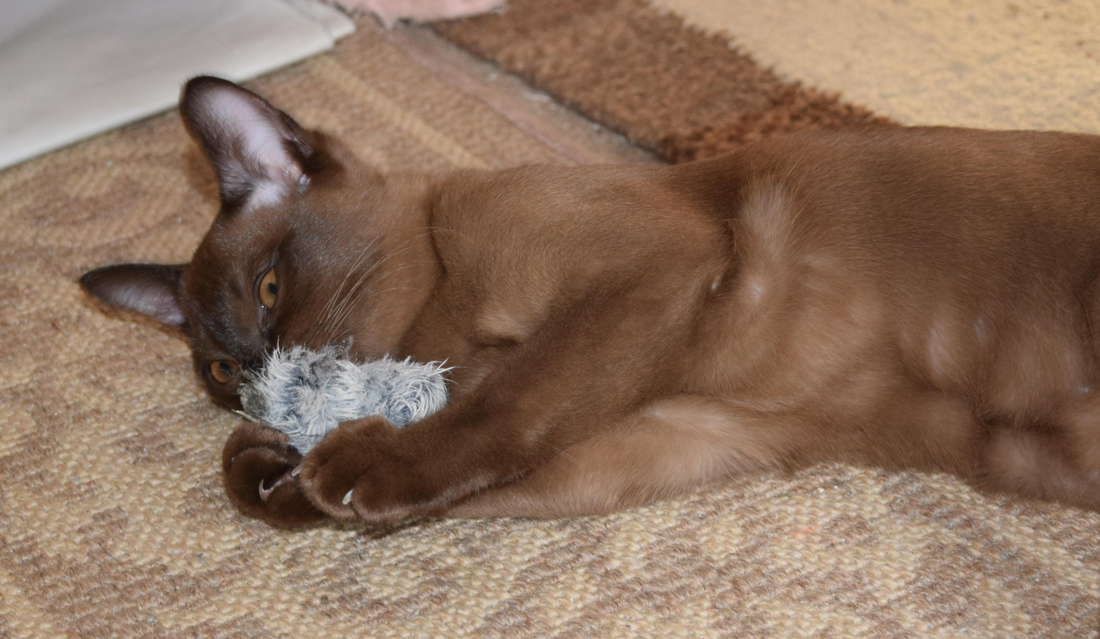 Tinkerbell As A Kitten