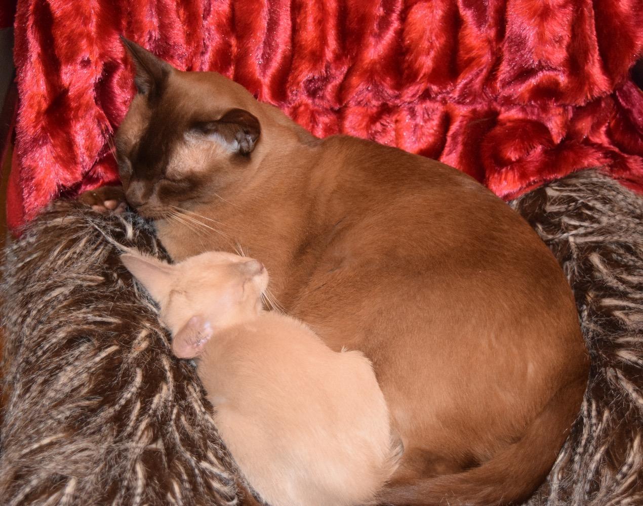 Buster Socialising A Kitten