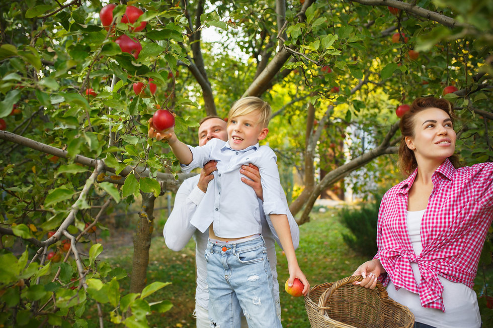 happy-young-family-during-picking-berries-garden-outdoors-love-family-lifestyle-harvest-au