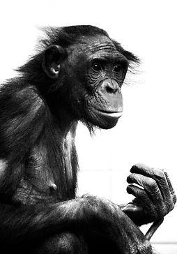 """Animals,Rieber, Alexander Rieber, Photography, Fotografie, www.rieber.eu"""""""