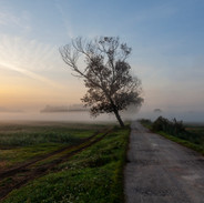 nebbia in Padule