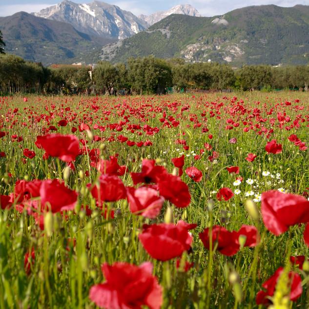 Versilia ed Alpi Apuane