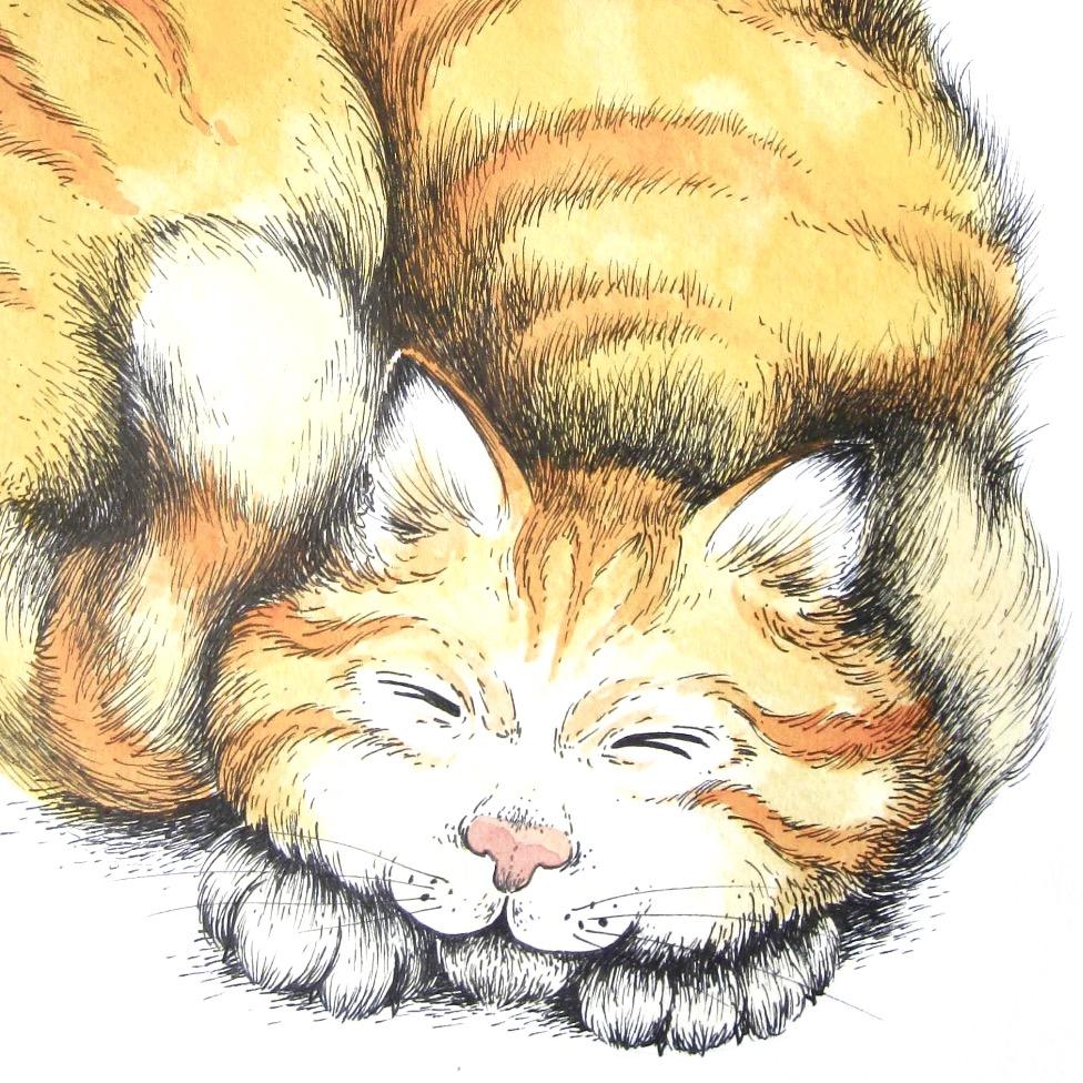 Martin the cat