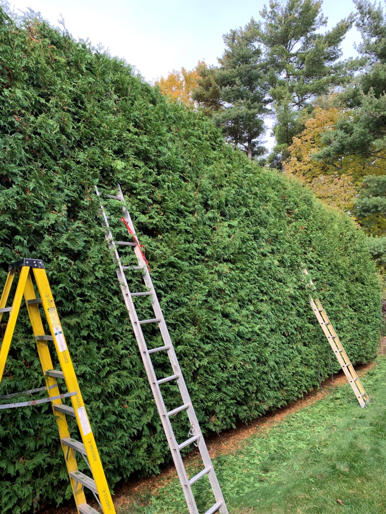 Best complements to hedges are trees because they add height and structure to the overall appearance of a property. With just sunlight, soil and water, trees thrive and do not demand much attention for care unlike any other parts of the landscape that require additional maintenance cost.