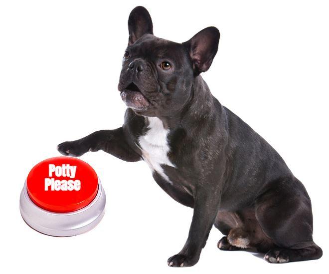 potty dog.JPG