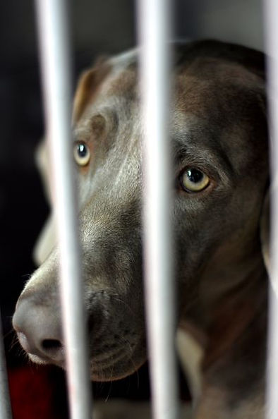 Brainy Dog behind bars.jpg