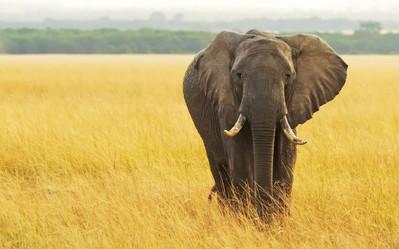 PNP, Elephant Reserve