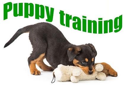 BrainyDog-programCover-Puppy-training.jpg