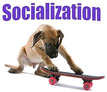 BrainyDog-programcover-Socialization-Puppy-on-skateboard.jpg