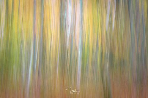 Van Gogh's Forest