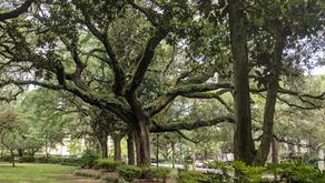 Savannah, Georgia - Part One