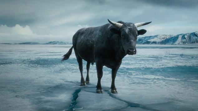 MoneySupermarket | Bull | Nick Ball