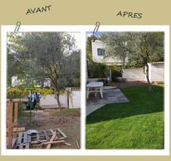 Gazon / terrasse / plantations