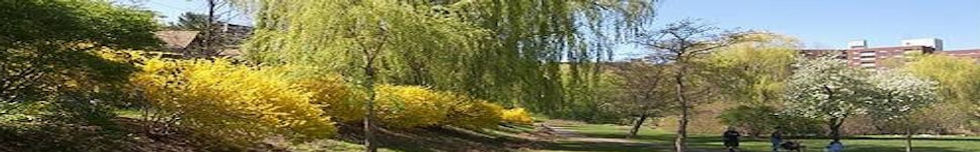 Griggs Park 2.jpg
