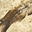 Thumbnail: Well Preserved Knightia Fish Pair