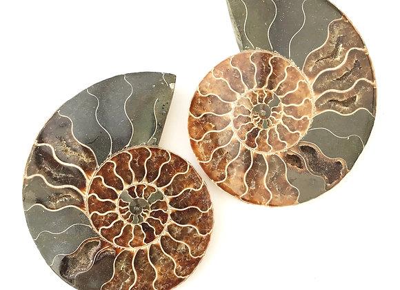 Pair Ammonite 'Cleoniceras'