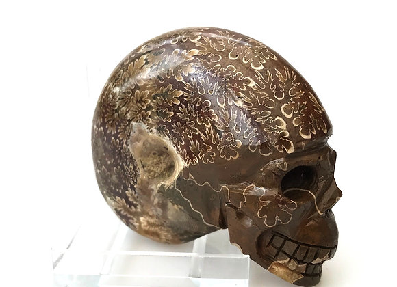Ammonite 'Phylloceras' with artistic carved skull