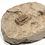 Thumbnail: Trilobite Ductina Vietnamica