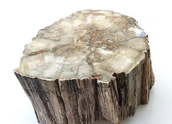 Araucaria Wood