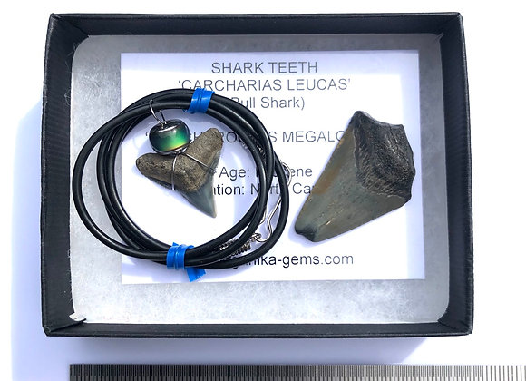 Shark Tooth & Pendant
