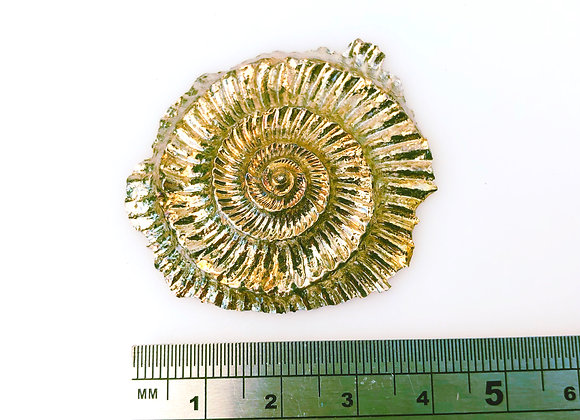 Bismuth Dactylioceras Ammonite Impression