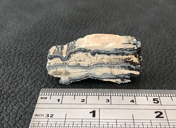 Mammoth Tooth Cross-Section