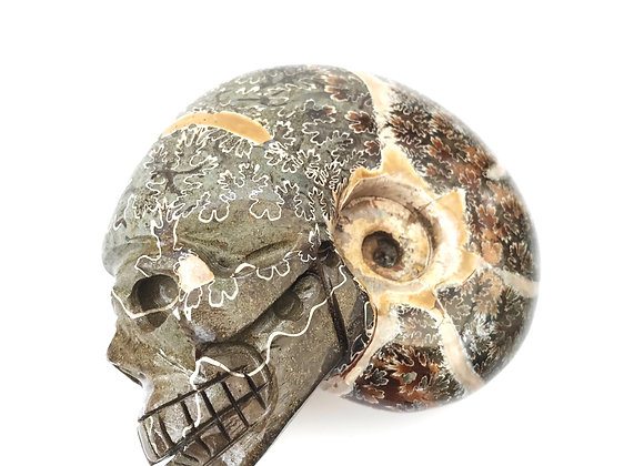 Ammonite 'Desmoceras' with artistic carved skull detail