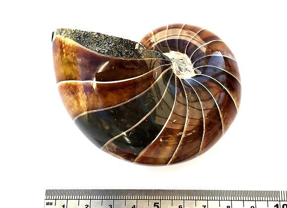 Nautilus Best Grade