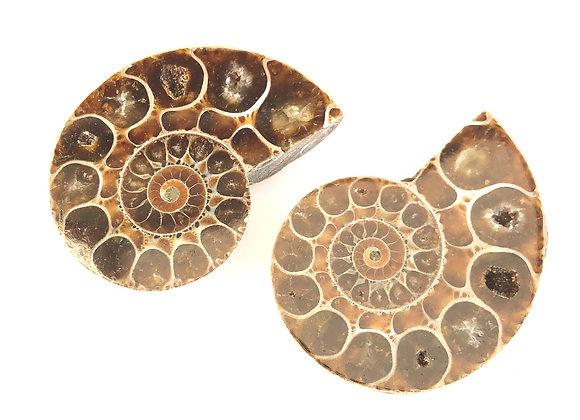 Lytoceras Cut Pair