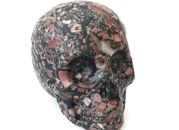 Fossil Crinoid Stone Skull